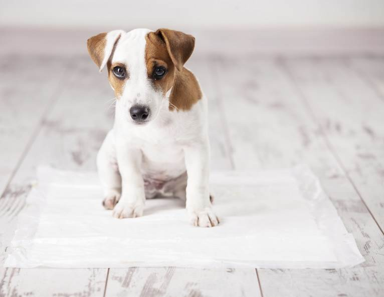 Puppy on a pad representing ODOGard®, a transformational way to eliminate urine malodor.
